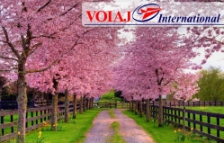 Travel agency Voiaj International (c. Cahul)