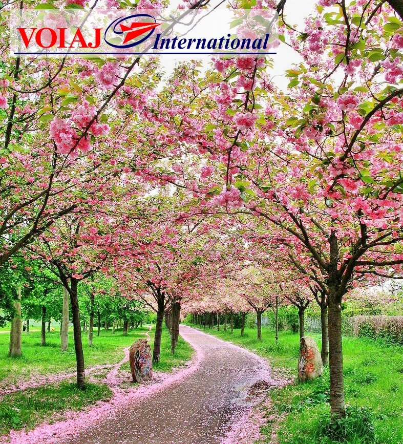 «Voiaj International» (бул.К.Негруцци, 4/2)