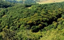 Государственный лесной заповедник Кодры