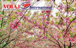 Travel agency Voiaj International (c.Balti)